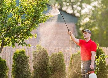 Lawn Care - Tree and Shrub Care